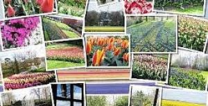 Dünyanın en büyük çiçek bahçesi Keukenhof