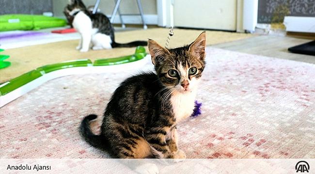 Tilburg Üniversitesi: Kediler Dışarıda kalmamalı