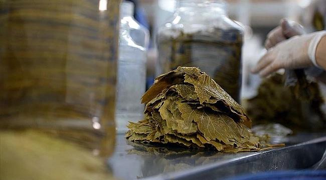 Erbaa'nın üzüm yaprağı yurt içi ve yurt dışında sofralara lezzet katıyor