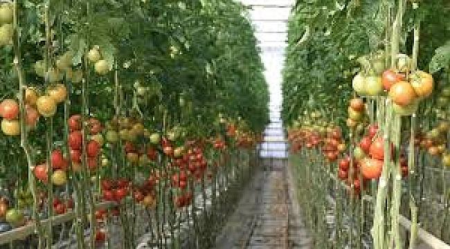 Hollanda'nın tarımsal ihracatı 95,6 milyar avro ile rekor kırdı