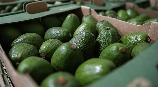 Nederland is de grootste niet-producerende exporteur van avocado's