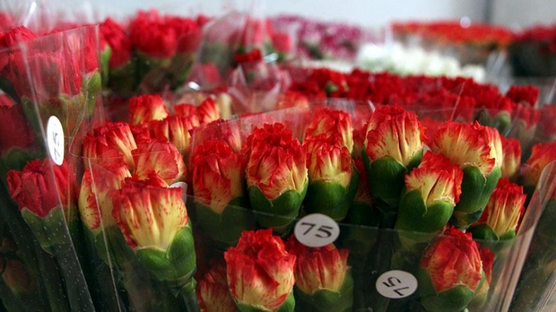 Hollanda 2019 yılında 6,2 milyar avroluk çiçek ihraç ederek rekor kırdı