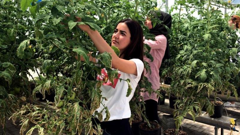 CNV maak noodstop mogelijk om arbeidsmigratie te beperken