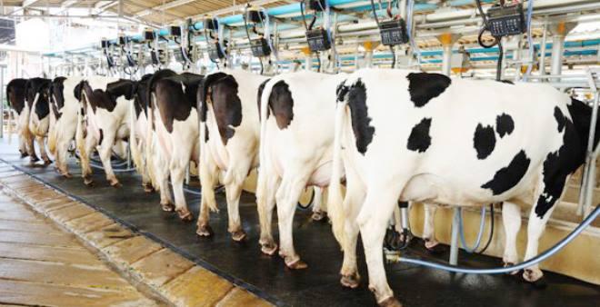 Grotere melkveebedrijven en meer melk