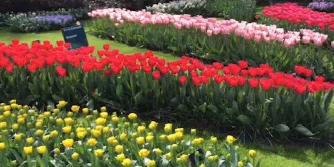 Internationaal toerisme blijft groeien in Nederland