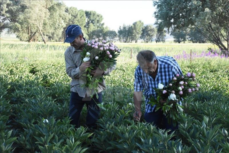 Hollanda'dan Yozgatlı iki kardeş Bozkır topraklarını şakayıkla tanıştırdılar