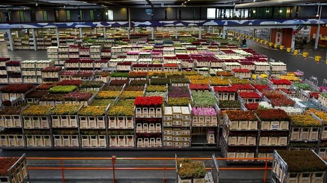Hollandalı dev şirketten milyonlarca liralık teklif