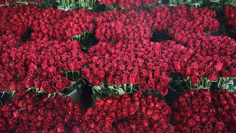 Jaarlijkse verkoop van Valentijnsbloesems ter waarde van $ 475 miljoen in Turkije