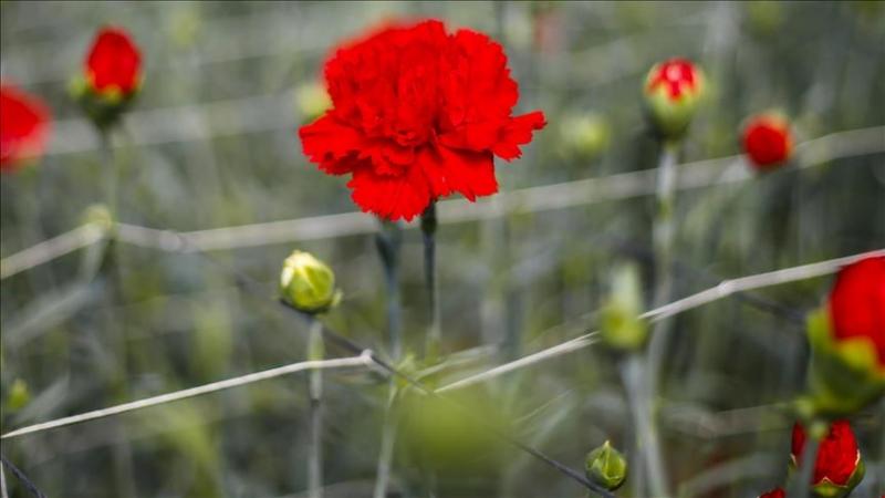 Nieuw exportrecord van 6,2 miljard voor bloemen en planten
