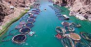 Elazığ'dan Hollanda ve Japonya'ya balık ihracatı