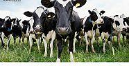 Hayvancılık ithalatında rekor artış yaşandı
