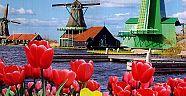 Hollanda'da Kurulan Şirket Sayısında Rekor Artış