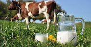 Hollanda'da Süt sektörünün cirosu yüzde 30 arttı