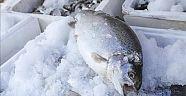 Ne yazık ki halkımız yeterince balık tüketmiyor