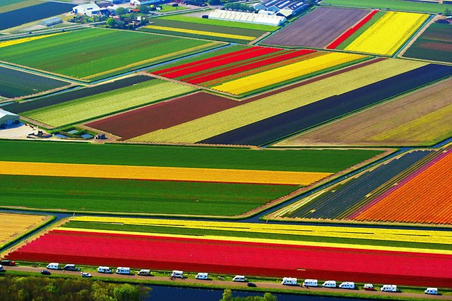 Tarımda 80 milyar Avro'luk Hollanda ihracatı