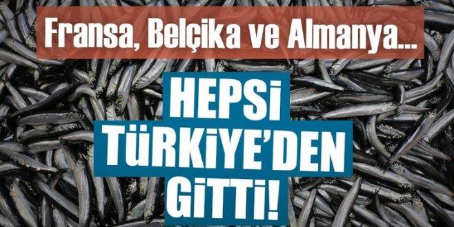 Türkiyeden 16 ülkeye hamsi ihraç edildi