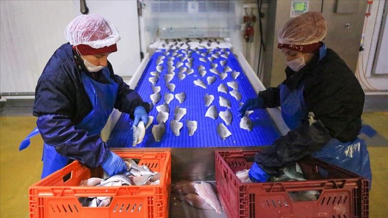 Türkiyenin balık ihracatı 1 milyar dolara ulaştı