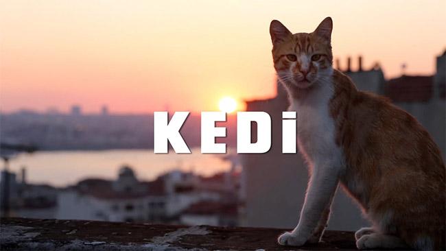 Yerli film Kedi Hollanda'da 'ilk 10a girdi