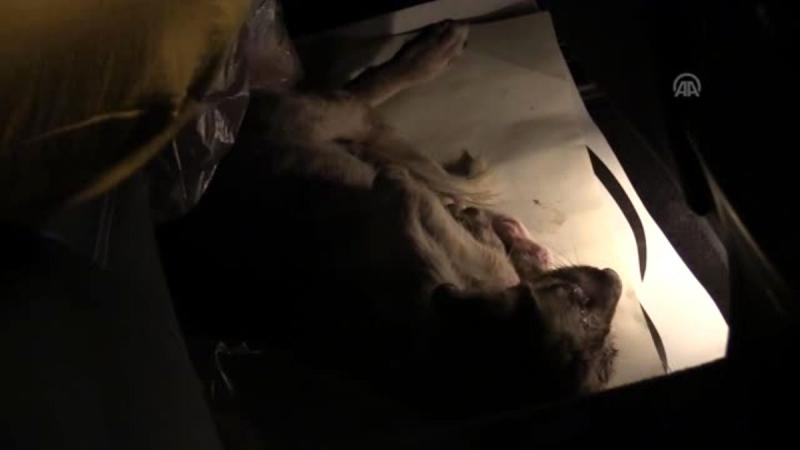 Yolda bulduğu yaralı köpeği kurtarmak için 80 kilometre giden Gurbetçi
